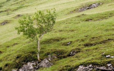 تصاویر پس زمینه طبیعت با کیفیت HD