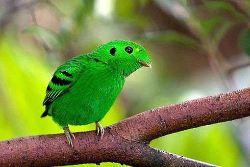 تصاویر زیبا از پرندگان رنگارنگ