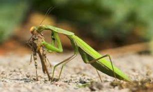 بزرگترین و ترسناک ترین حشره برائ انسان کدام است