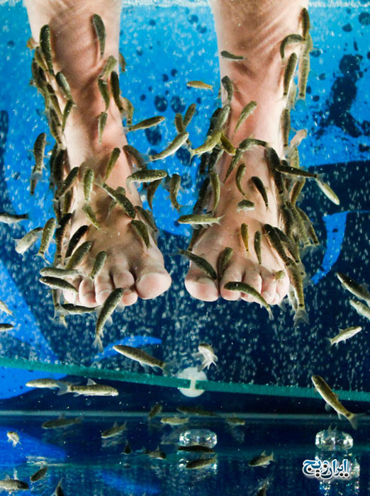 ماهی درمانی  (Fish Therapy)