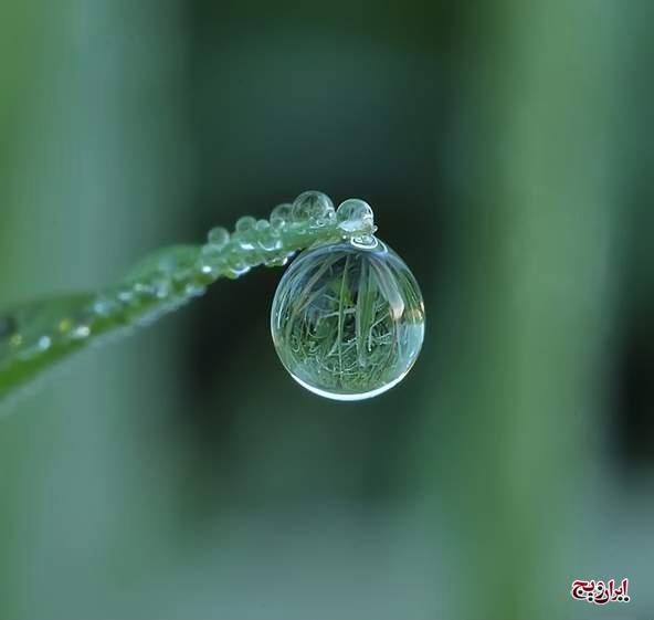 ترنم قظرات باران