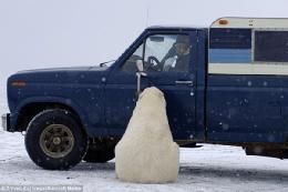 علاقه خرس قطبی به فورد + تصاویر