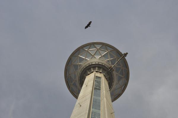 حمله کلاغ به عقاب در دفاع از خانه اش در دیواره برج میلاد