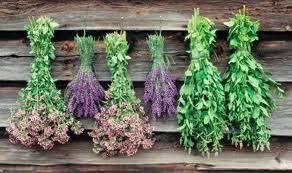 مزیت ایران برای توسعه اقتصاد دانش بنیان گیاهان دارویی در جهان