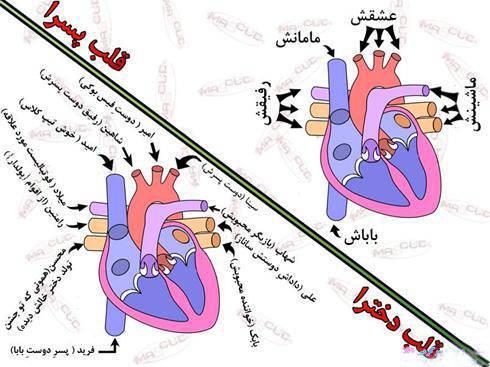 تفاوت قلب دخترها با قلب پسرها