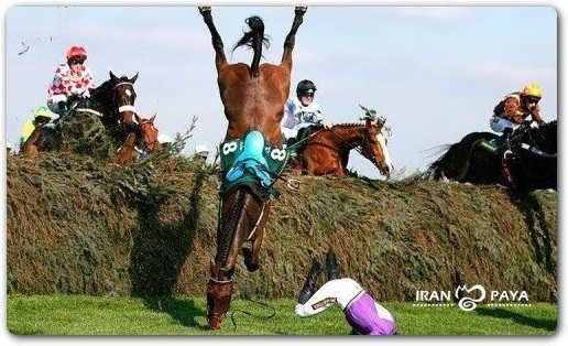 عکس/ اسبی که سرنگون شد