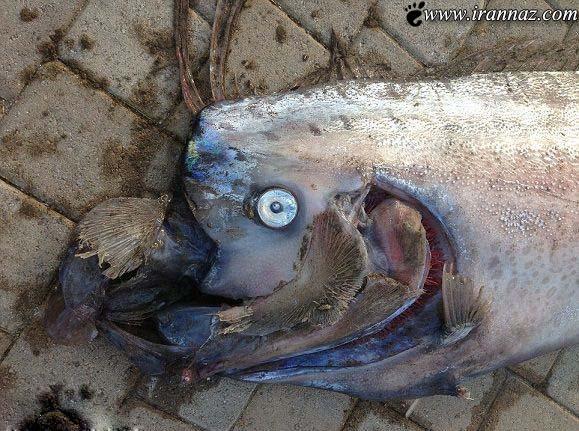 هجوم این غول دریایی باورنکردنی به ساحل + تصویر
