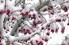 """نگاهی متفاوت به """"گیاهان"""" در فصل سرما"""