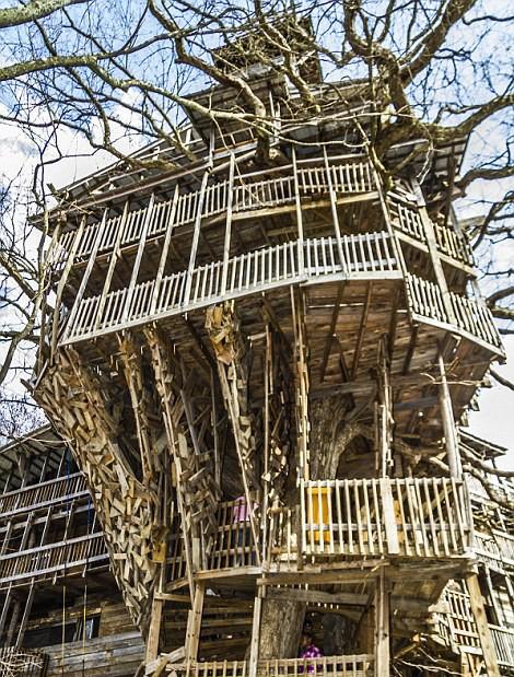 بلندترین خانه درختی دنیا + عکس