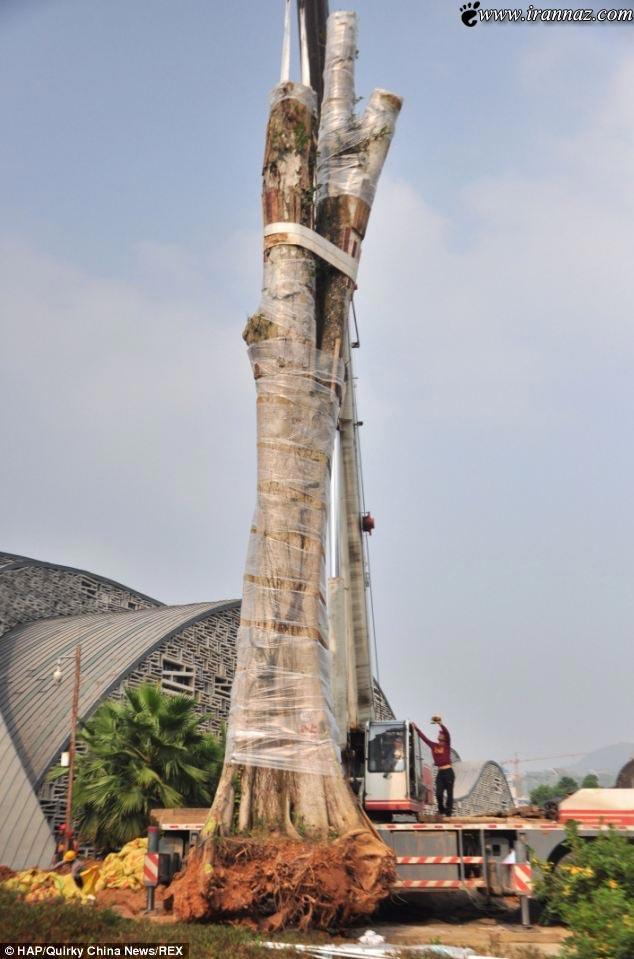 سرقت درخت 26 تنی در دنیا خبر ساز شد + تصویر