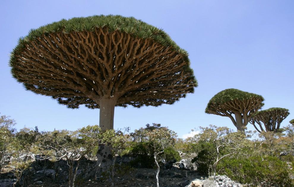 10 تصویر دیدنی از جزیره زیبای سوکوترا در اقیانوس هند