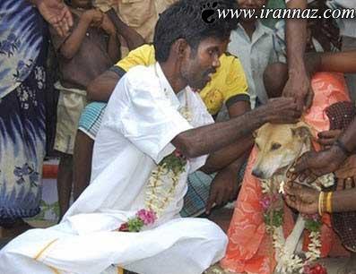 ازدواج بی رحمانه ی دختر 9 ساله با سگ ولگرد + تصویر