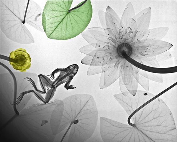 نقاشی های دیدنی از عکس های گرفته شده با اشعه ایکس