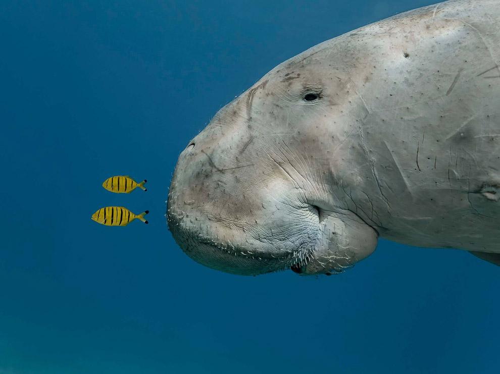 بهترین عکس های حیوانات در سال 2013