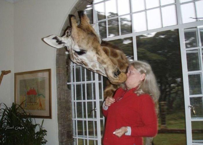 حمله بی رحمانه حیوانات به زنان بی دفاع ! + تصاویر