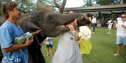 اتفاق هولناک برای تازه عروس + تصاویر