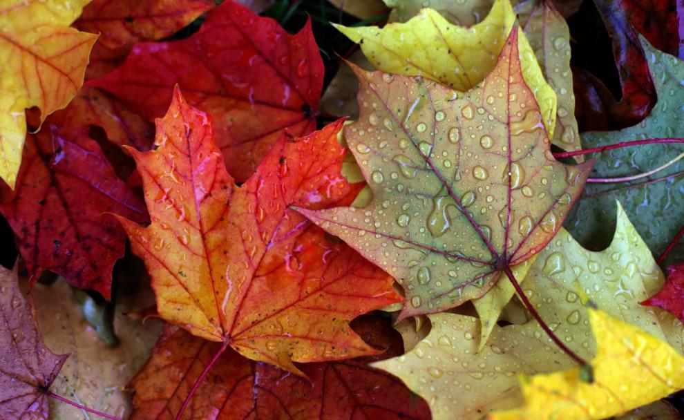 تصاویر زیبا و شگفت انگیز از فصل پاییز