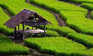 """واردات """"محصولات کشاورزی"""" براساس واقعیت نیست"""
