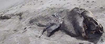 کشف بسیار عجیب یک گودزیلا در نیوزلند!! + تصویر