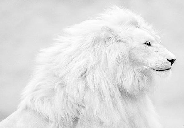 عکس سفید سفید