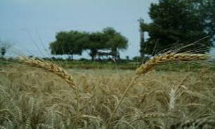 """""""صادرات"""" محصولات کشاورزی با فراهم سازی بسترهای حمایتی لازم"""