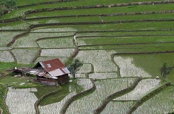 """حمایت از بخش """"کشاورزی"""" یکی از راههای مبارزه با بحران کمبود آب"""