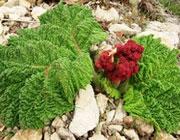 سبزیجات بهاره را فراموش نکنید