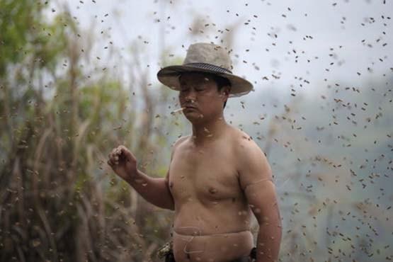 مردی پوشیده از زنبور + عکس