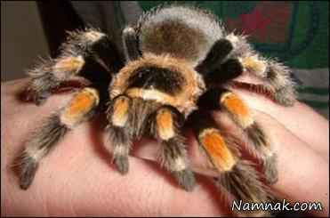 کشف عنکبوت جدید