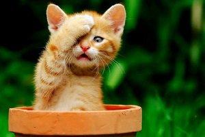 اعدام گربه مجرم توسط داعش