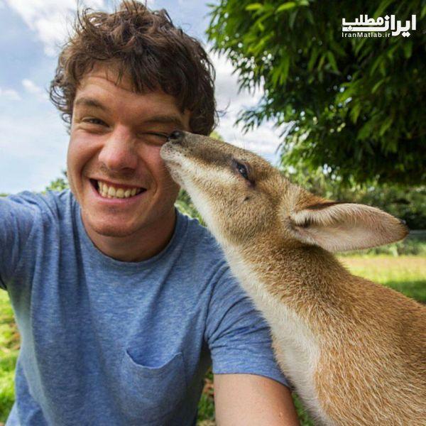 گرفتن عکس های سلفی جالب با حیوانات