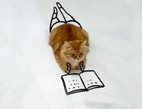 عکس های جالب و خنده دار از آقای گربه