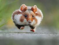 عکس های جالب از حیات وحش خنده دار