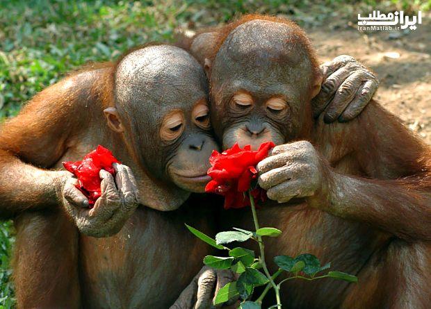 عشق بازی جالب حیوانات با گل ها + عکس
