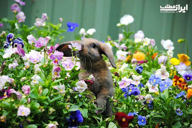 عکس جالب عشق بازی عکس حیوانات