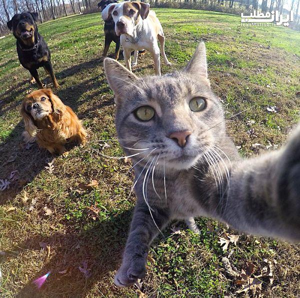 عکس سلفی گرفتن جالب گربه + تصاویر