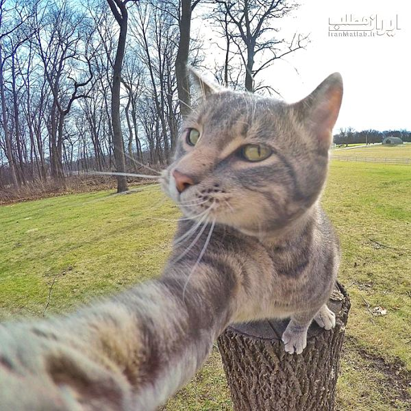 عکس سلفی عکس سلفی گرفتن عکس جالب عکس گربه