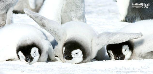 عکس پنگوئن عکس حیوانات تصاویر زیبا