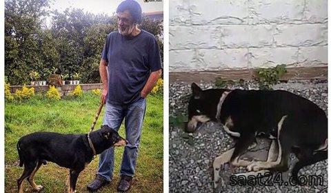 حقیقت ماجرای خبر مرگ سگ حبیب چیست؟! + عکس