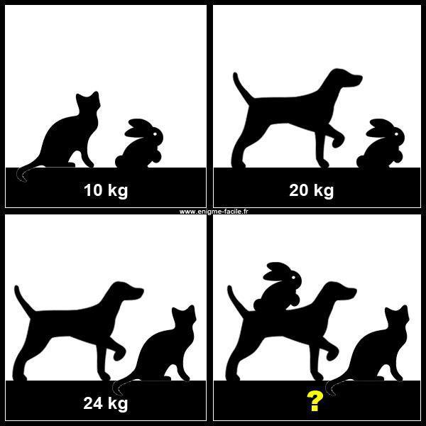 معمای حیوانات روی ترازو/ میتوانید وزن این حیوانات را محاسبه کنید؟