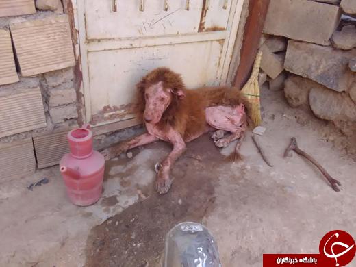 پیدا شدن حیوانی عجیب در شهرستان ملایر /تصاویر