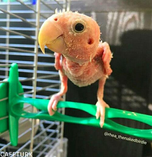 بانمک ترین مرغ عشقی که تا به حال دیده اید (عکس)