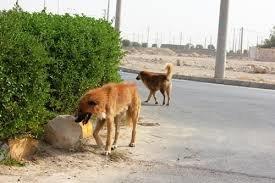 علیه پارکهای تهران که حیوانات وحشی دارند اعلام جرم خواهیم کرد