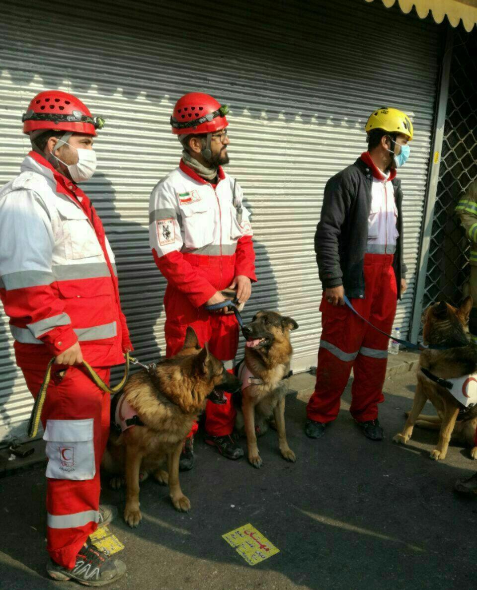 سگ های زنده یاب در محل ریزش ساختمان پلاسکو +عکس