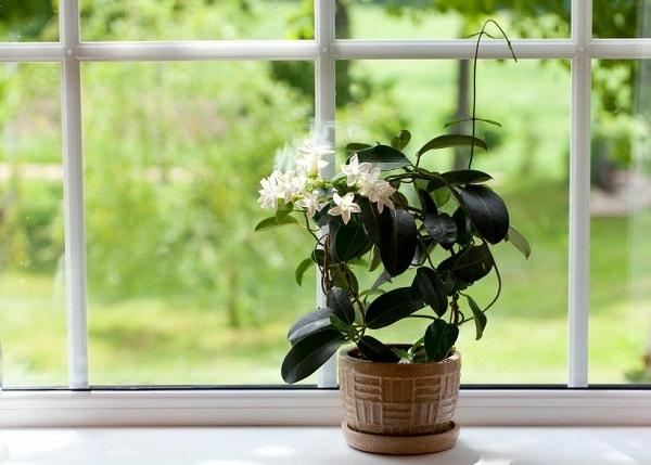 12 گیاه تصفیه کننده هوا برای اتاق خواب