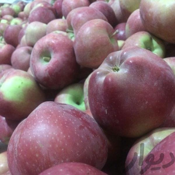 """افزایش """"قیمت سیب درختی""""/ هر کیلو """"سیب درختی"""" ۴۵۰۰ تومان"""