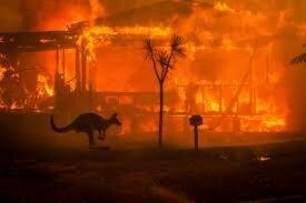 انقراض ٣٠ گونه جانوری در استرالیا یک فاجعه بینالمللی است