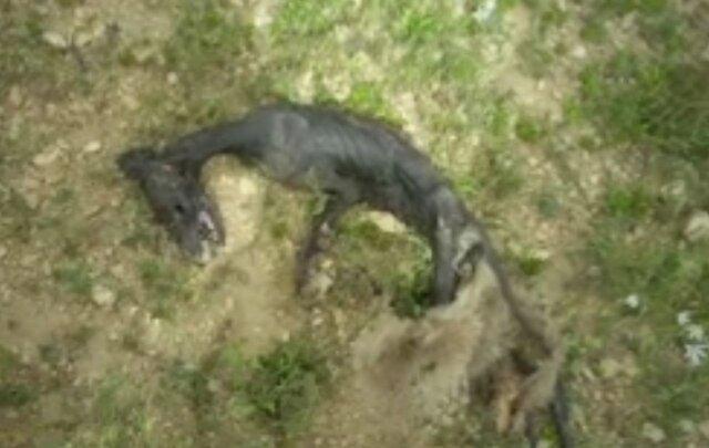 """کشف لاشه یک موجود عجیب در منطقه شکار ممنوع """"خرم ناز"""" بویراحمد"""