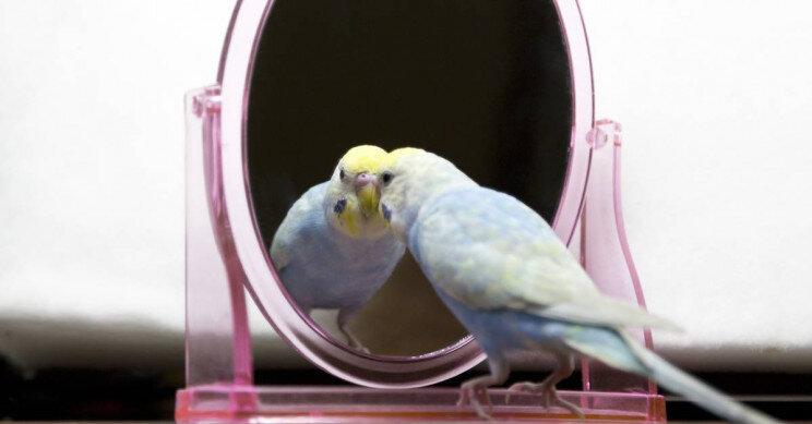پرندگان هوشمند هستند و حتی شاید خویشتنآگاه باشند!