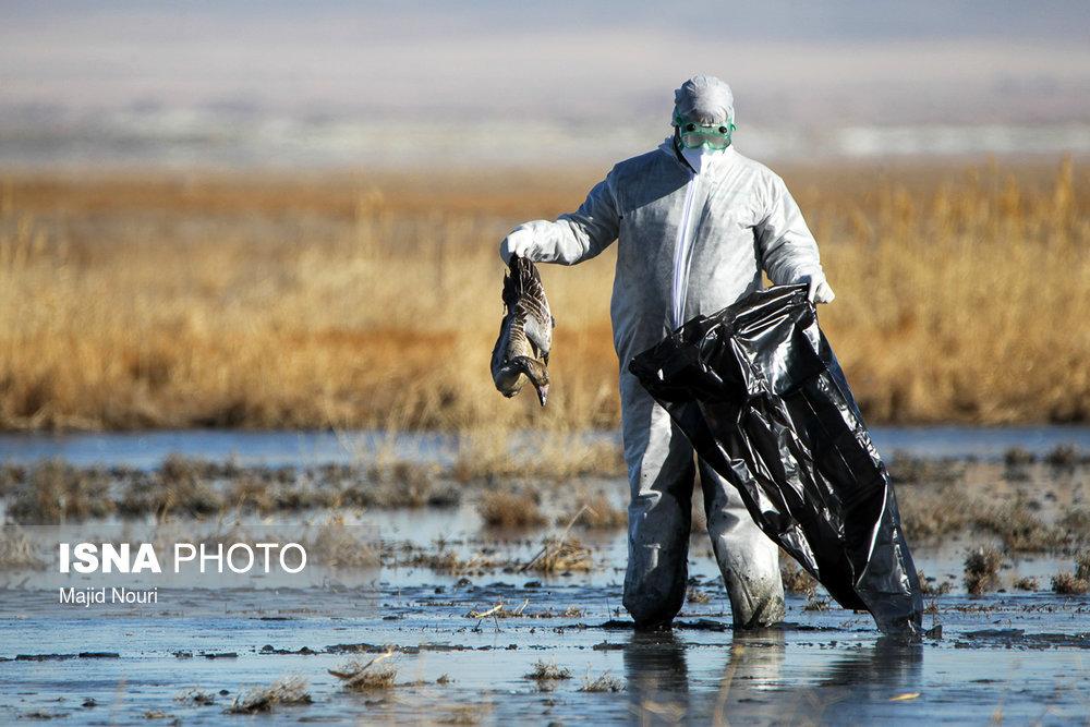 هنوز مورد انسانی آنفلوآنزای پرندگان گزارش نشده است